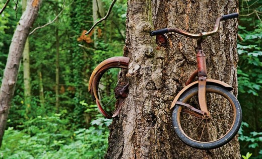Vashon Island Bike in the tree