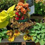 Pretty flowers - Little Bird Nursery on Vashon Island