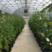 Vashon Fresh - Food and goods production on Vashon Island