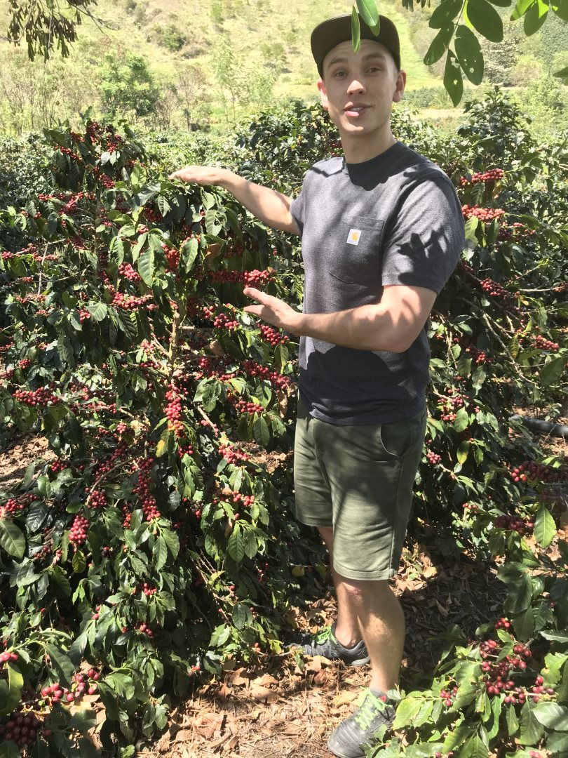 Blossom Coffee Roasters - Picking beans on farm